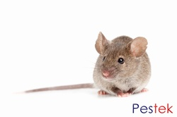 Mouse Control Treatments in Leeds